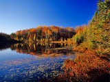 Pond in the Chaquamegon National Forest, Cable, Wisconsin, USA Stampa fotografica di Chuck Haney