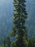 Old-Growth Forest Above Chinook Creek, Mount Rainier National Park, Washington, USA Photographic Print by Scott T. Smith