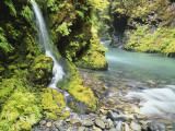 Seasonal Waterfall Near Graves Creek, Olympic National Park, Washington, USA Photographic Print by Stuart Westmoreland