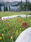 Boulders Amid Wildflowers, Ryder Lake, High Uintas Wilderness, Wasatch National Forest, Utah, USA Photographic Print by Scott T. Smith