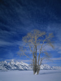 Bare Tree in Snowy Landscape, Grand Teton National Park, Wyoming, USA Photographic Print by Scott T. Smith