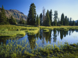 Trees and Grass Reflecting in Pond, High Uintas Wilderness, Wasatch National Forest, Utah, USA Photographic Print by Scott T. Smith