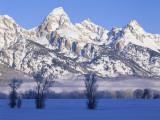 Snowcapped Mountains and Bare Tree, Grand Teton National Park, Wyoming, USA Papier Photo par Scott T. Smith