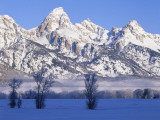 Snowcapped Mountains and Bare Tree, Grand Teton National Park, Wyoming, USA Fotografisk tryk af Scott T. Smith