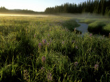 Early Morning Fog on Packer Meadows, Montana, USA Photographic Print by Chuck Haney