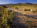 Amargosa River and Owlshead Range in Death Valley National Park, California, USA Photographic Print by Chuck Haney
