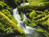 Waterfall over Moss Covered Rock, Olympic National Park, Washington, USA Photographic Print by Stuart Westmoreland