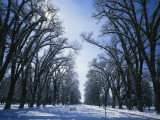 Tree Lined Promenade in Winter, Liberty Park, Salt Lake City, Utah, USA Photographic Print by Scott T. Smith