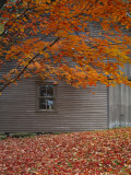 Barn and Maple Tree in Autumn, Vermont, USA Photographie par Scott T. Smith