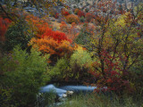 Maples and Willows in Autumn, Blacksmith Fork Canyon, Bear River Range, National Forest, Utah Photographic Print by Scott T. Smith