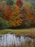 Forest and Pond in Autumn, North Landgrove, Vermont, USA Photographic Print by Scott T. Smith