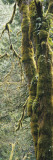 Mossy Tree Trunk, Olympic National Forest, Olympic National Park, Washington, USA Fotografisk trykk av Paul Souders