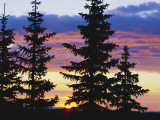 Silhouette of Trees at Sunrise, Sierra Madre, Medicine Bow-Routt National Forest, Wyoming, USA Photographic Print by Scott T. Smith