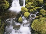 Moss Growing on Rocks Waterfall, Sol Duc Falls, Olympic National Park, Washington, USA Photographic Print by Stuart Westmoreland