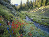 Wildflowers Along Chamberlain Creek, White Cloud Peaks, Sawtooth National Reservation Area, Idaho Photographic Print by Scott T. Smith