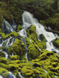Waterfall over Moss Covered Rocks, Umpqua National Forest, C.W. State Park, Oregon, USA Photographic Print by Stuart Westmoreland