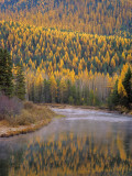 Larch Trees Reflect into Mcdonald Creek in Autumn in Glacier National Park, Montana, USA Photographic Print by Chuck Haney