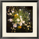 Starburst Limited Edition Framed Print by Rebecca Tolk