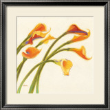 Callas in the Wind I Prints by Shirley Novak