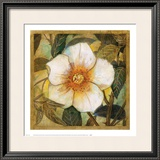 White Magnolia I Prints by Danson 
