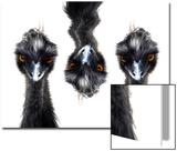 Three Emus Poster par Abdul Kadir Audah