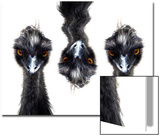 Three Emus Poster by Abdul Kadir Audah