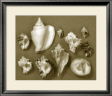 Shell Collector Series II Posters by Renee Stramel