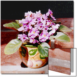 African Violet in Bright Light Prints by Rich LaPenna