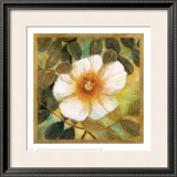 White Magnolia II Print by Danson 