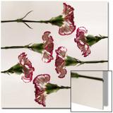 Carnation Flowers in a Row Prints by Abdul Kadir Audah