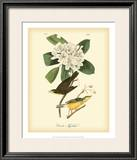 Canada Flycatcher Posters by John James Audubon