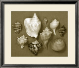 Shell Collector Series I Prints by Renee Stramel