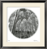 Sunlit Forest Limited Edition Framed Print by Ken Paul