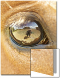 Horse Eye Poster by April Bauknight