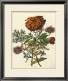 Floral Posy III Poster by Giovanni Ferrari