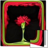 Red Carnation as in a Stage Prints by Winfred Evers