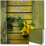 Yellow Acacia Tree Blossoms Against Aging Yellow-Painted Wood Posters by Diane Miller