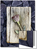 Frosted Rose on Weathered Piece of Timber Prints by James Guilliam