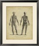 Anatomy Study III Art by Jack Wilkes