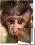 Baby Monkey Posters by Abdul Kadir Audah