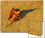 A Fallen Autumn Leaf and it's Shadow Prints by Claire Morgan