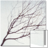 Silhouette of a Tree Branch Prints by Daniel Root