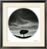 Sunlit Tree Limited Edition Framed Print by Ken Paul