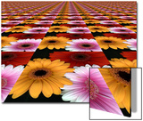 Gerbera Flowers Multiplied in Tiles Prints by Winfred Evers