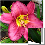 Daylily Beauty Prints by Rich LaPenna
