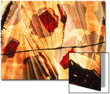 Abstract Image in Red and Yellow Prints by Daniel Root