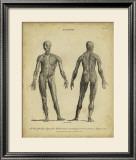 Anatomy Study IV Posters by Jack Wilkes
