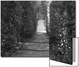 Path with Shrubs at the Boboli Gardens in Florence, Italy Prints by Andrea Sperling