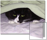 Cat Looking Out from under Blanket Posters by Rich LaPenna