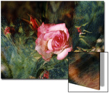 Pink Rose with Abstract Background Prints by Margaret L. Jackson